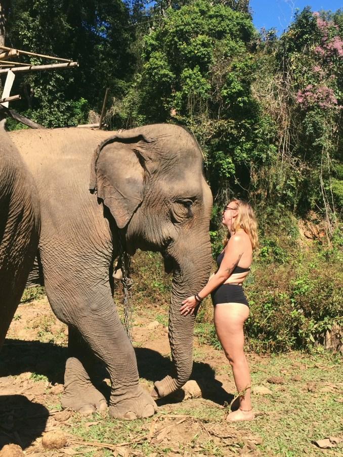 elephant-south-east-asia