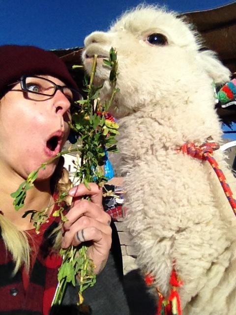 paige-gessell-alpaca