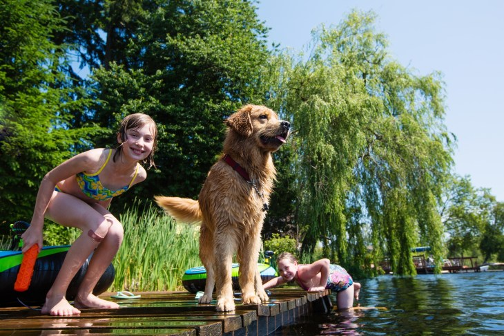 swimming_with_dog