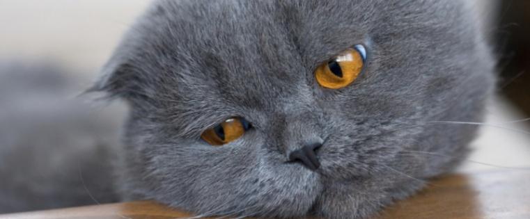 content-marketing-boring-industries-cat