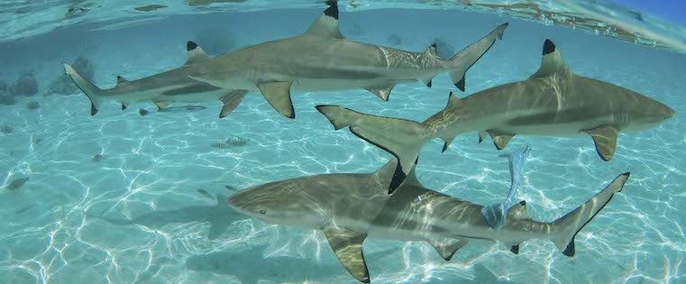 Shark Tank Ecommerce