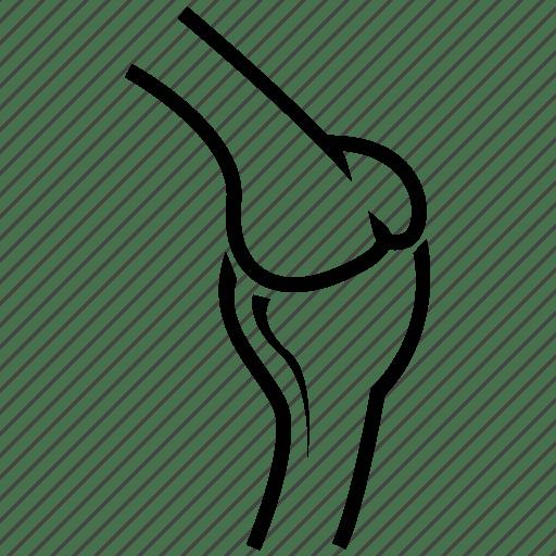 Aid, bone, cartilage, grid, internal organs, joint, organ icon