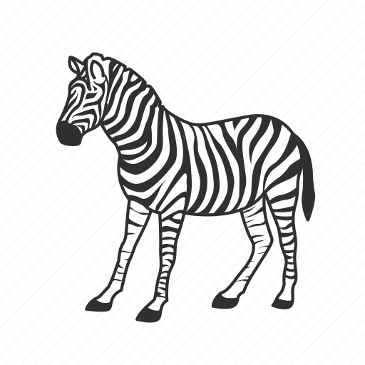 Black and white striped, equidae family, large land mammal