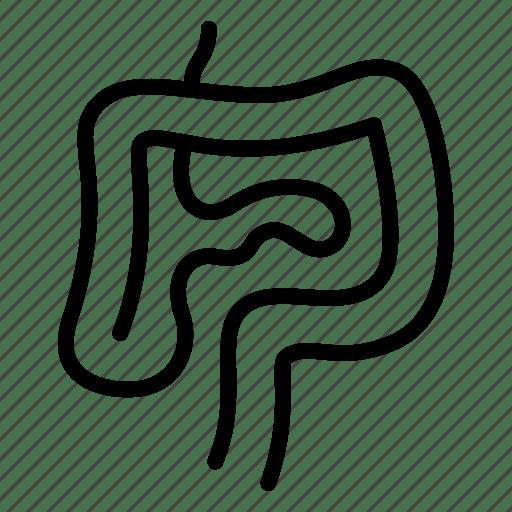Anatomy, digestion, gastroenterology, internal, intestines