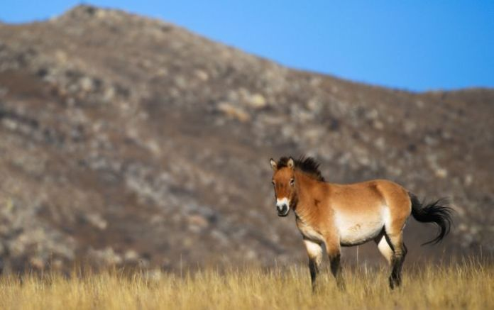 Adoption is an Option: New Initiative to Help Rare & Endangered Horse Population Launched in Russia