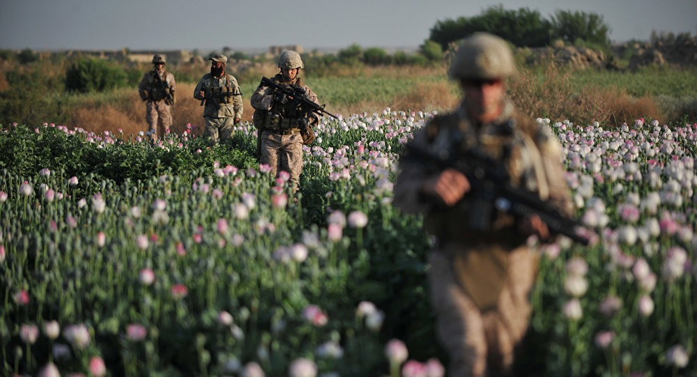 US Marines and Gunnary Sergeant Nate Cosby (R), Staff Sergeant Josh Lacey (2nd R) and Navy Hospitalman 2 Daniel Holmberg (L) from Border Adviser Team (BAT) and Explosive Ordance Disposal (EOD) 1st and 2nd Marine Division (Forward) walk through opium poppy field at Maranjan village in Helmand province on April 25, 2011 as they take patrol with their team and Afghanistan National Police