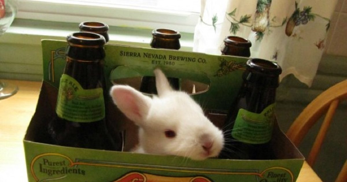 Happy Easter Bunny Drinking Beer Facebook Comments And Free Coloring
