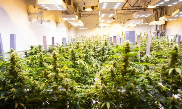 cannabis tour los angeles