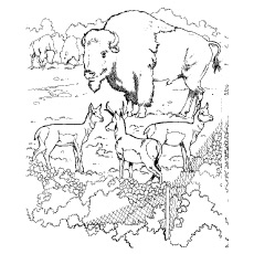 Top 25 Free Printable ( ^ ^)っ Zoo Zoo Coloring Pages