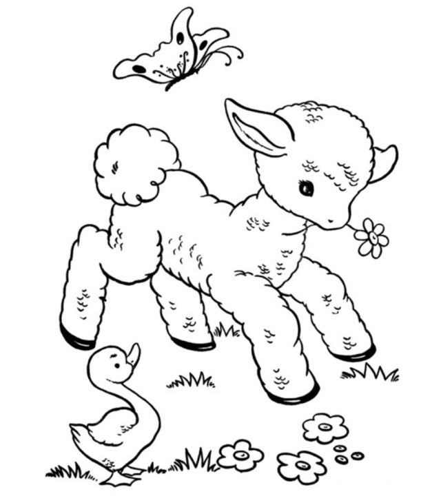 Top 20 Free Printable Sheep Coloring Pages Online