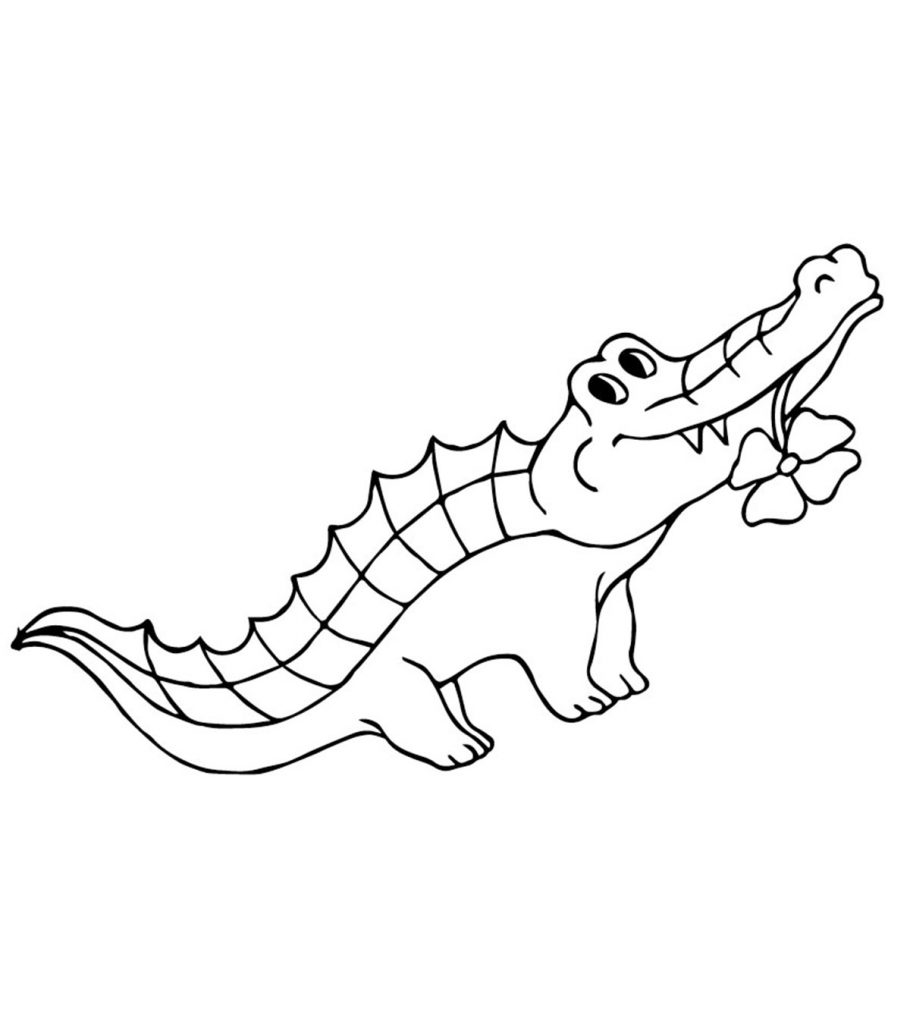 Top 25 Free Printable Alligator Coloring Pages Online