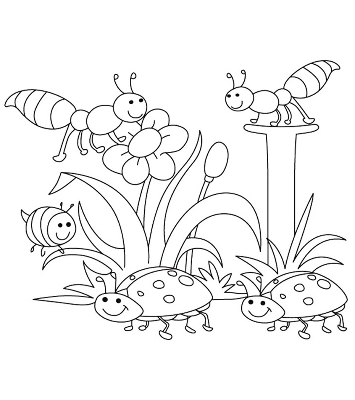 Worksheet For Kindergarten Plant Soil