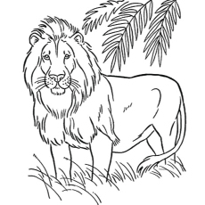 Realistic Coloring Pages Of Lions Coloring Pages