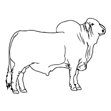 bull coloring page. 10 Cute Bull Coloring Pages For Your Toddler bull coloring page  Page for kids