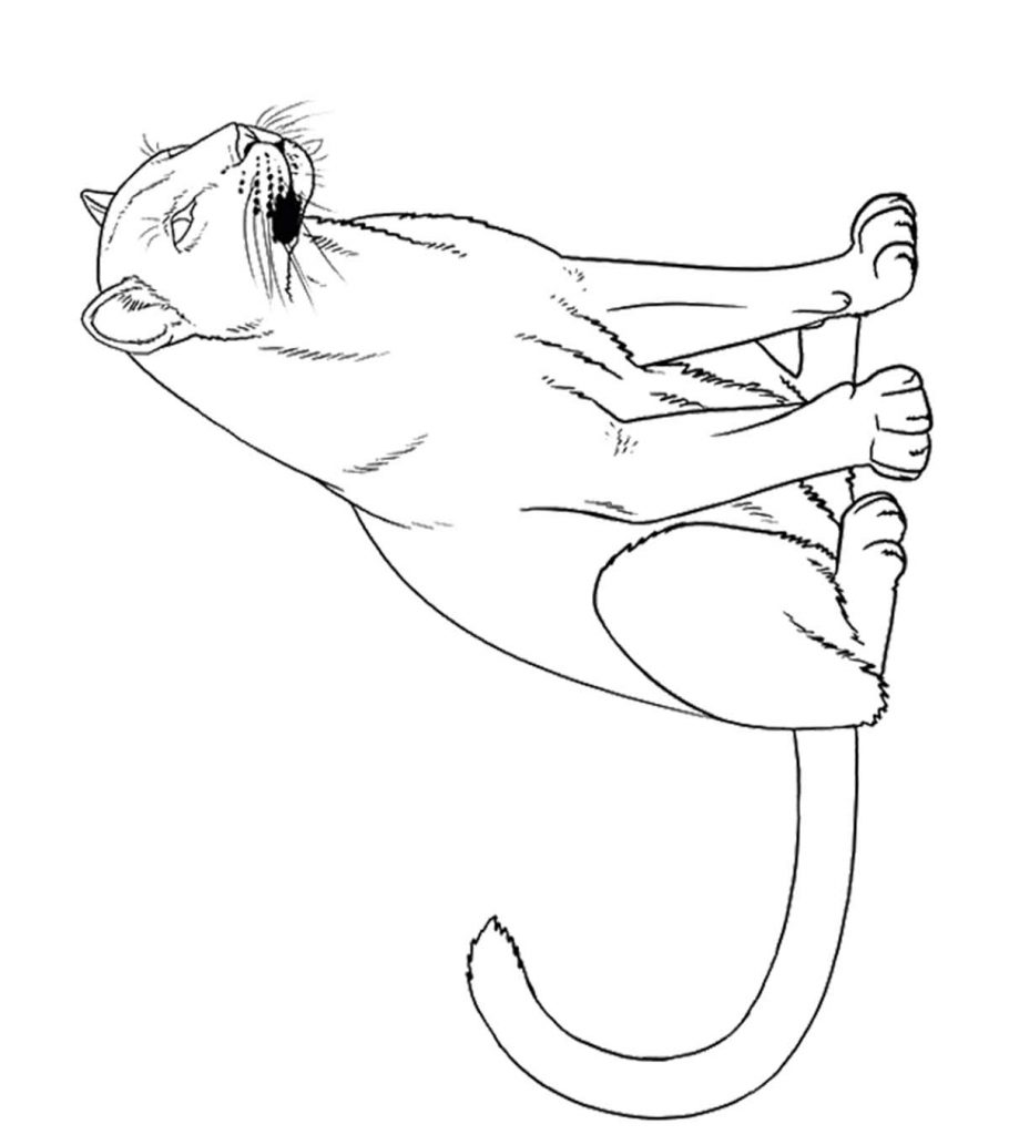 10 Printable Panther Coloring Pages Your Toddler Will Love
