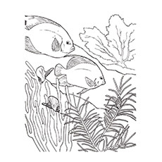 coral coloring pages # 10