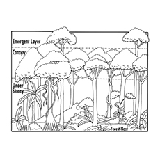 27 Printable Nature Coloring Pages For Your Little Ones