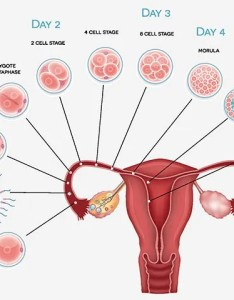 Pregnancy implantation symptoms also what are the early signs rh momjunction