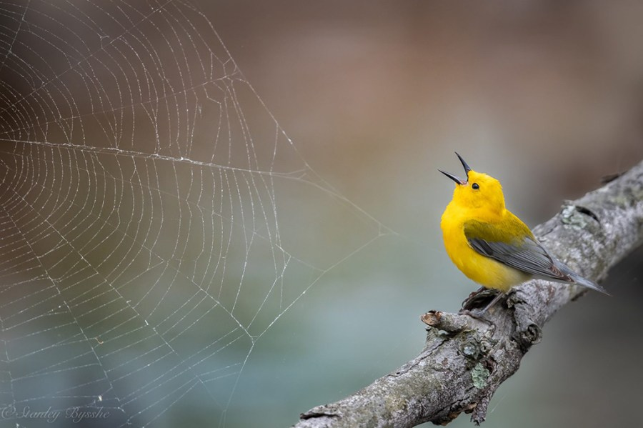 """Today's Photo Of The Day is """"Singing to the Web"""" by Stan Bysshe. Location: Alexandria, Virginia."""