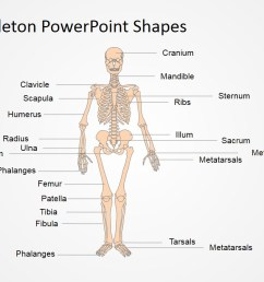 human anatomy presentation template anatomy and physiology presentation in powerpoint  [ 1280 x 720 Pixel ]