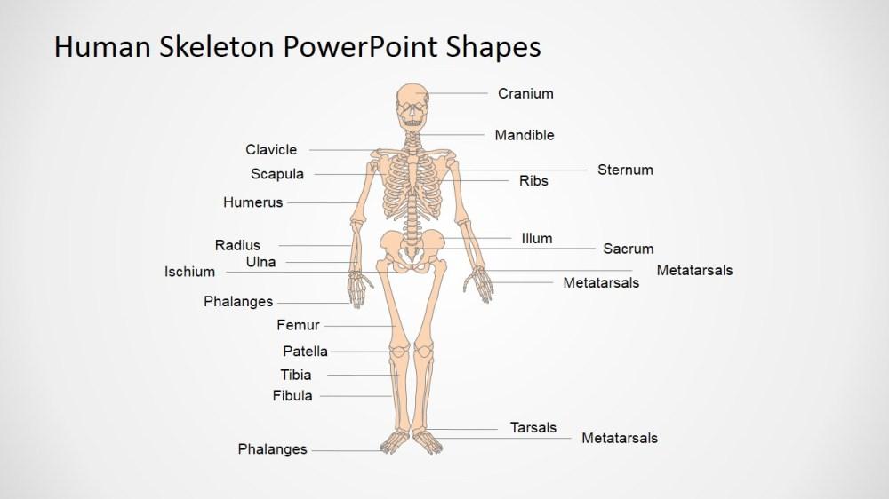 medium resolution of human anatomy presentation template anatomy and physiology presentation in powerpoint