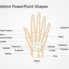 Names Of Bones In Human Skeleton Diagram Led Strip Wiring 12v Powerpoint Shapes Slidemodel Body Systems Presentation Pictures