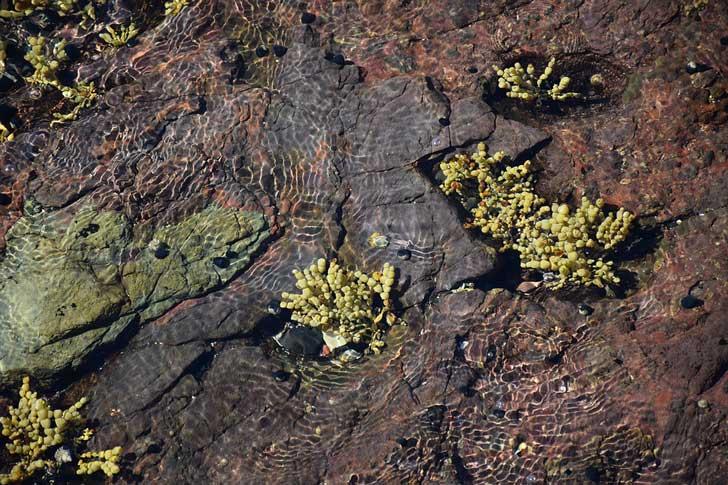 algae-1213292_960_720