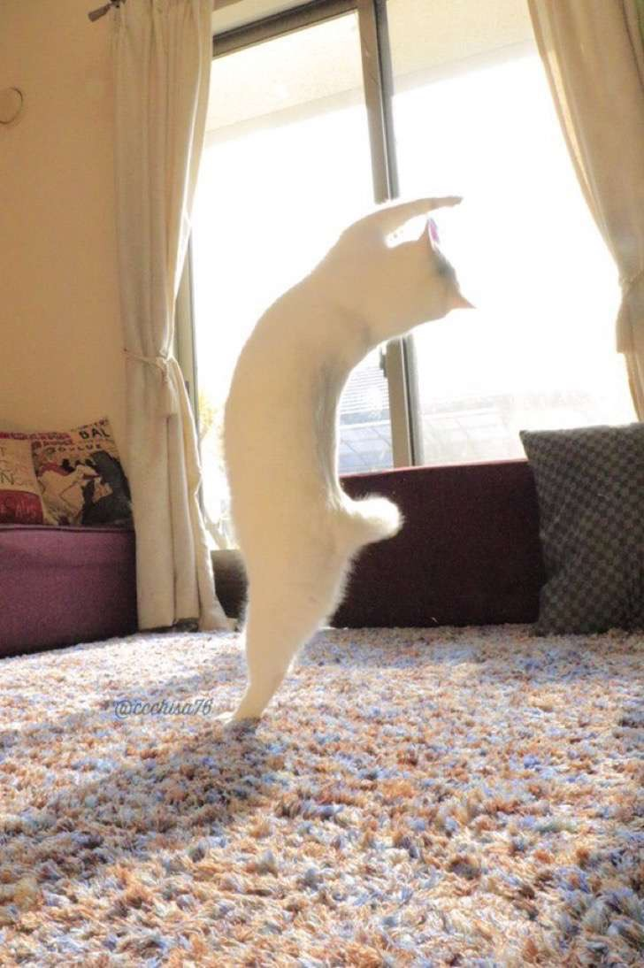 ballet-cat-japan-44 2