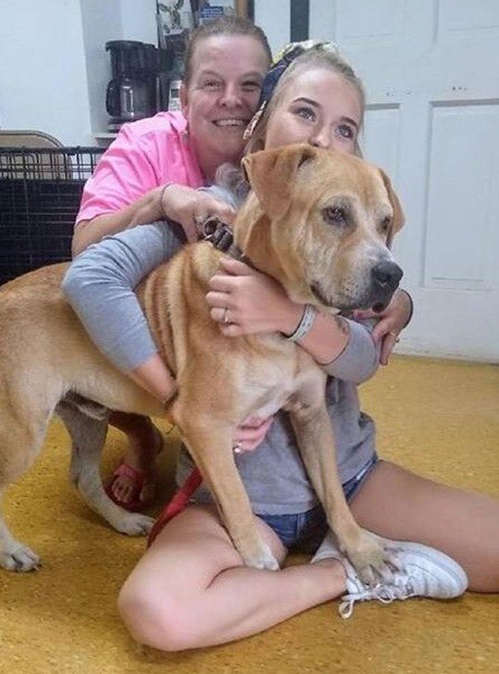 Captura de Pantalla 2020 08 06 a las 16.54.17 - Lo rescataron, amarrado y con graves heridas, pero ahora da apoyo emocional. Ayuda a quienes lo aman