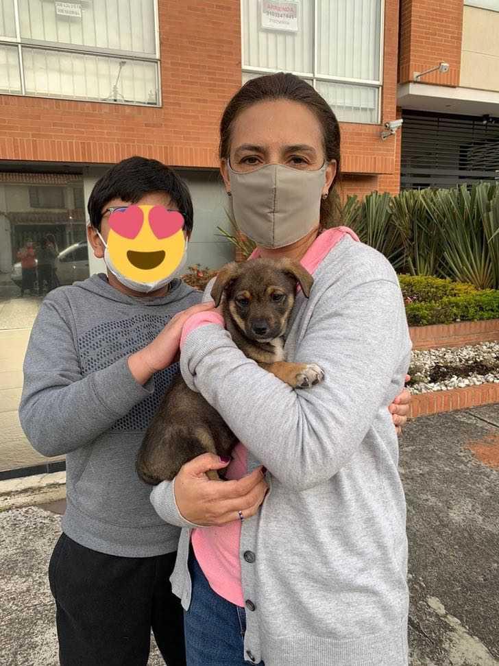 dejan plantado a perrito que iba a ser adoptado0002 - Familia dejó plantado a un perrito tras prometer ir a adoptarlo. Quedó vestido, bañado y confundido