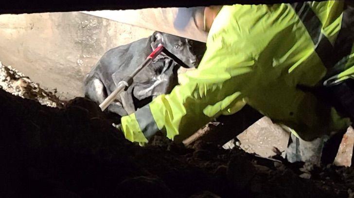 Captura de Pantalla 2020 12 02 a las 16.09.14 - Encuentran perro que pasó 6 semanas extraviado en una obra de construcción. Se escondió por miedo