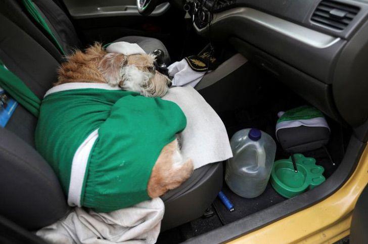 Captura de Pantalla 2020 12 28 a las 14.48.24 - Coronel, el perro taxista que recorre las calles de Colombia vestido de Santa Claus. Regala alegría