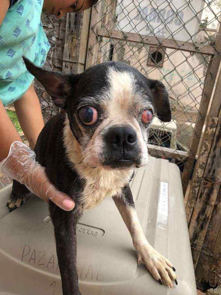 perro maltrato colombia cali criadero maltrato0003 - Logran cerrar criadero clandestino de perros en Cali, Colombia. Más de 60 animales eran explotados