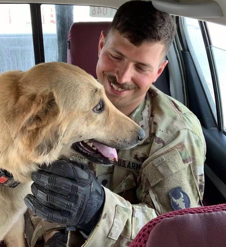 Captura de Pantalla 2021 01 19 a las 13.21.04 - Soldado rescató a perro callejero en Irak y lo llevó consigo a Estados Unidos. Fue su compañero