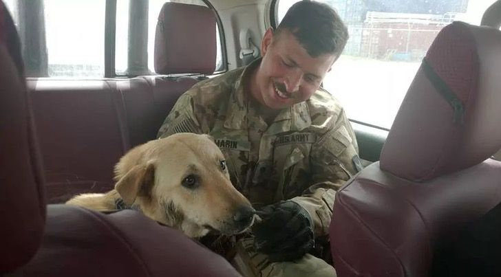 Captura de Pantalla 2021 01 19 a las 13.21.28 - Soldado rescató a perro callejero en Irak y lo llevó consigo a Estados Unidos. Fue su compañero