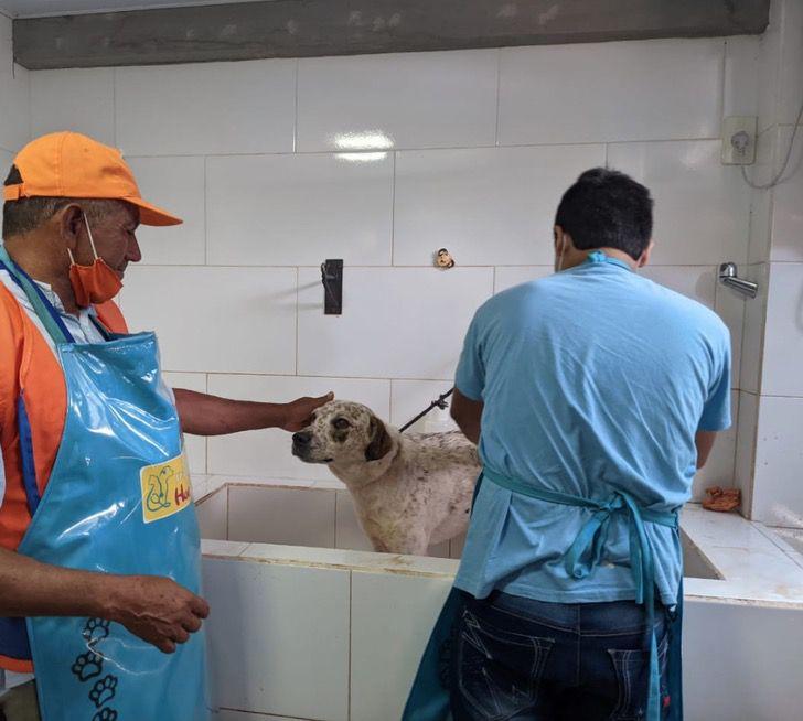 Captura de Pantalla 2021 01 21 a las 16.46.40 - Indio, el perrito vendedor de lotería, recibió regalos por su buen trabajo. Los merece todos