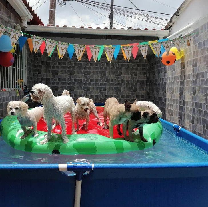 Captura de Pantalla 2021 03 03 a las 11.04.26 - Perrito celebró su cumpleaños en una piscina e invitó a sus amigos. No respetó el distanciamiento