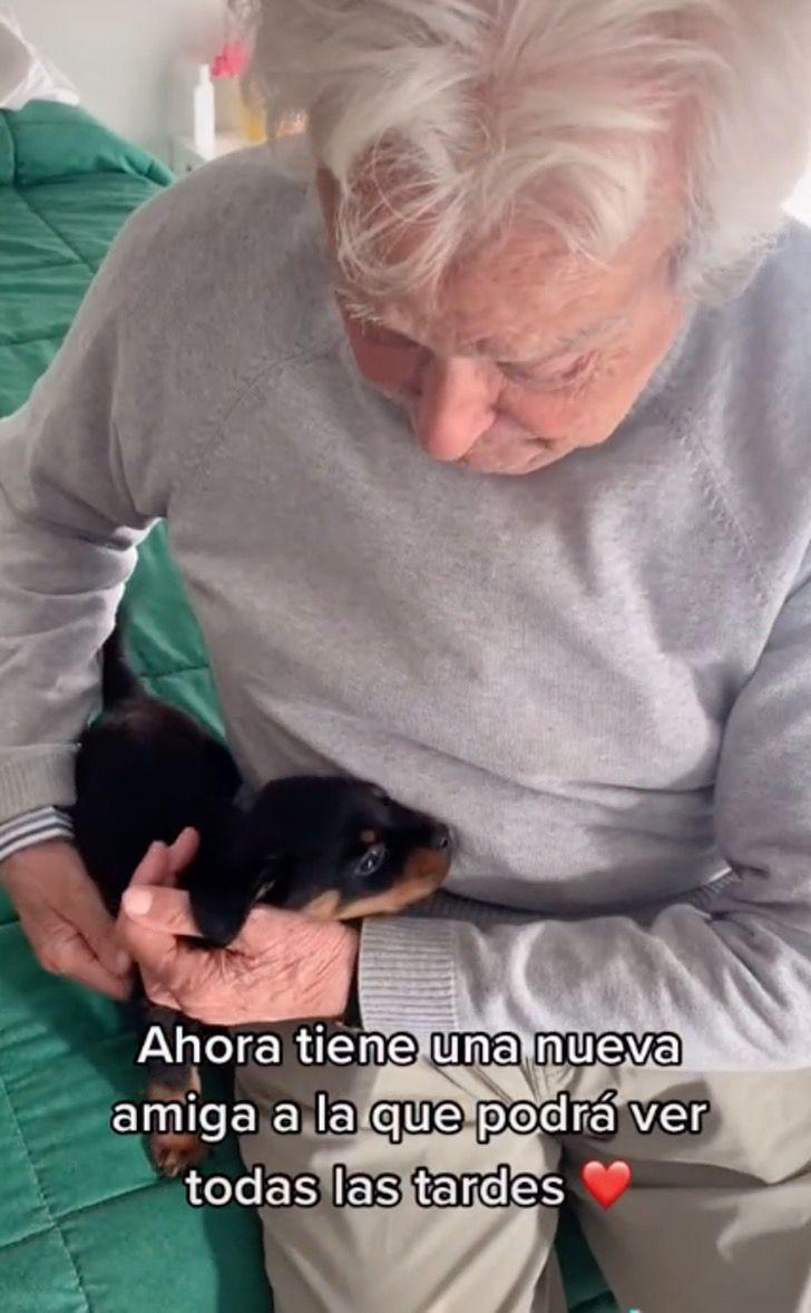 anciano perro ternura lagrimas cachorro tiktok0002 - Abuelo de 91 años llora de alegría al recibir un cachorro. Adora a los animales, disfruta de dar amor