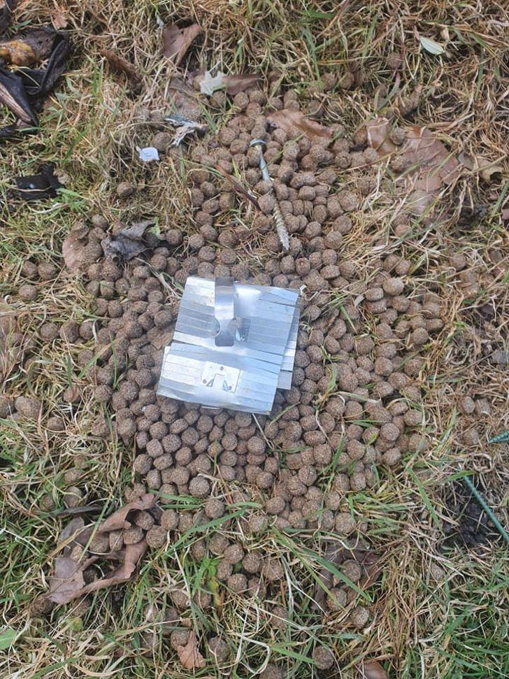 """165740526 10157494643550146 7674567130115482762 n - Mujer salva a su perro de comer alimento mezclado con clavos en la calle: """"Es un acto criminal"""""""