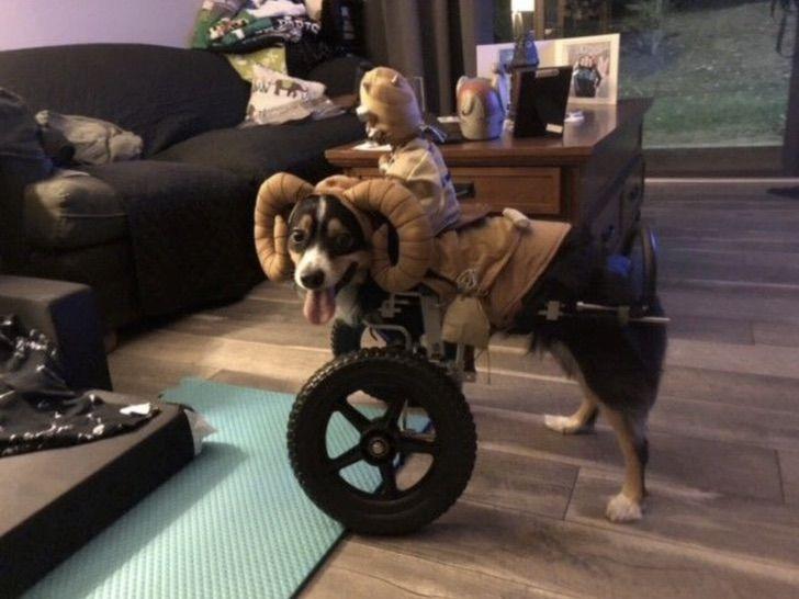 Captura de Pantalla 2021 04 21 a las 13.11.49 - Perro que nació sin patas frontales le enseña a estudiantes sobre la aceptación. Aprenden de bondad