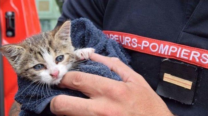 Captura de Pantalla 2021 06 22 a las 16.37.02 - Bombero en Francia adoptó al gatito que rescató dentro de una alcantarilla. Tenía 3 meses de nacido
