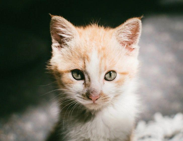 Captura de Pantalla 2021 06 22 a las 16.37.53 - Bombero en Francia adoptó al gatito que rescató dentro de una alcantarilla. Tenía 3 meses de nacido