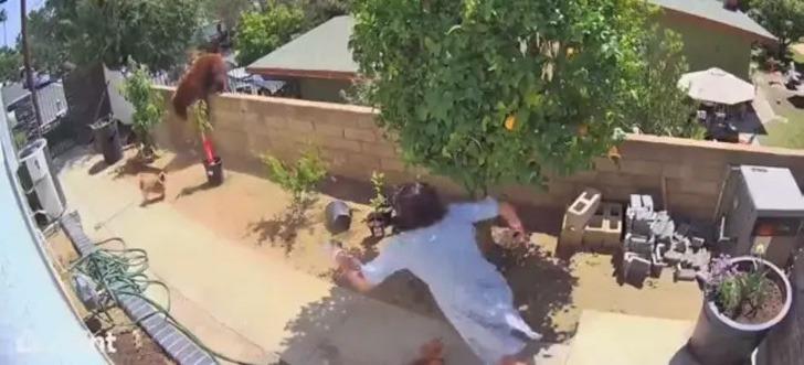 osa mujer protege perros0005 - Mujer se enfrentó a una osa para salvar a sus perros. La empujó de la verja usando sus propias manos
