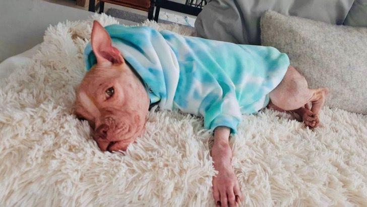 """Captura de Pantalla 2021 08 19 a las 14.40.23 - Famosos argentinos adoptaron a perrita con enfermedad en la piel: """"Estamos muy felices de tenerla"""""""