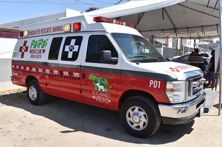 Captura de Pantalla 2021 08 27 a las 14.24.01 - Ciudad en México tendrá su ambulancia para traslado y rescate de animales. Ayudan a los callejeros