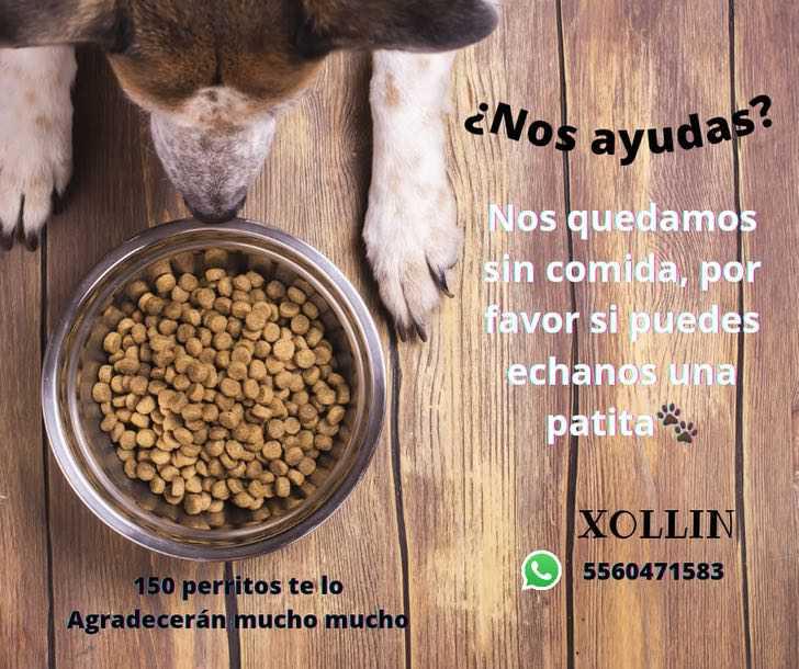 xollin refugio donaciones - Xollin, el refugio de México que rescata a perritos del maltrato extremo y les devuelve la sonrisa