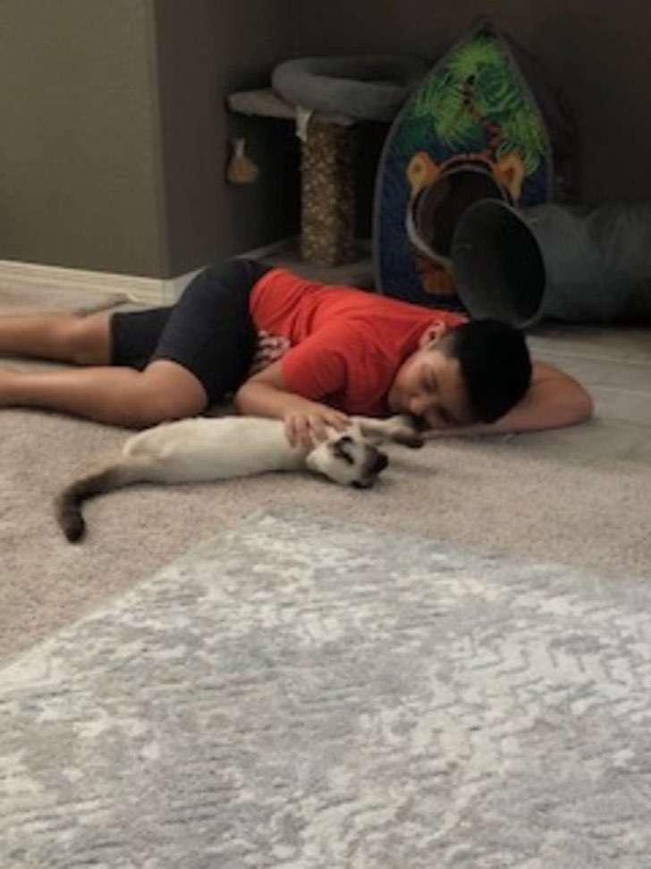 scale - Niño rompe en llanto al reencontrarse con su gato perdido después de cinco semanas. Son inseparables