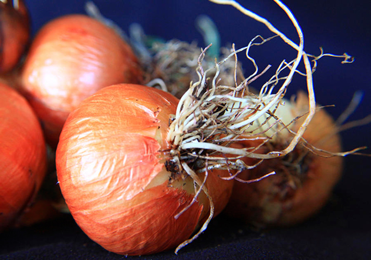 onion-roots-david-kehrli