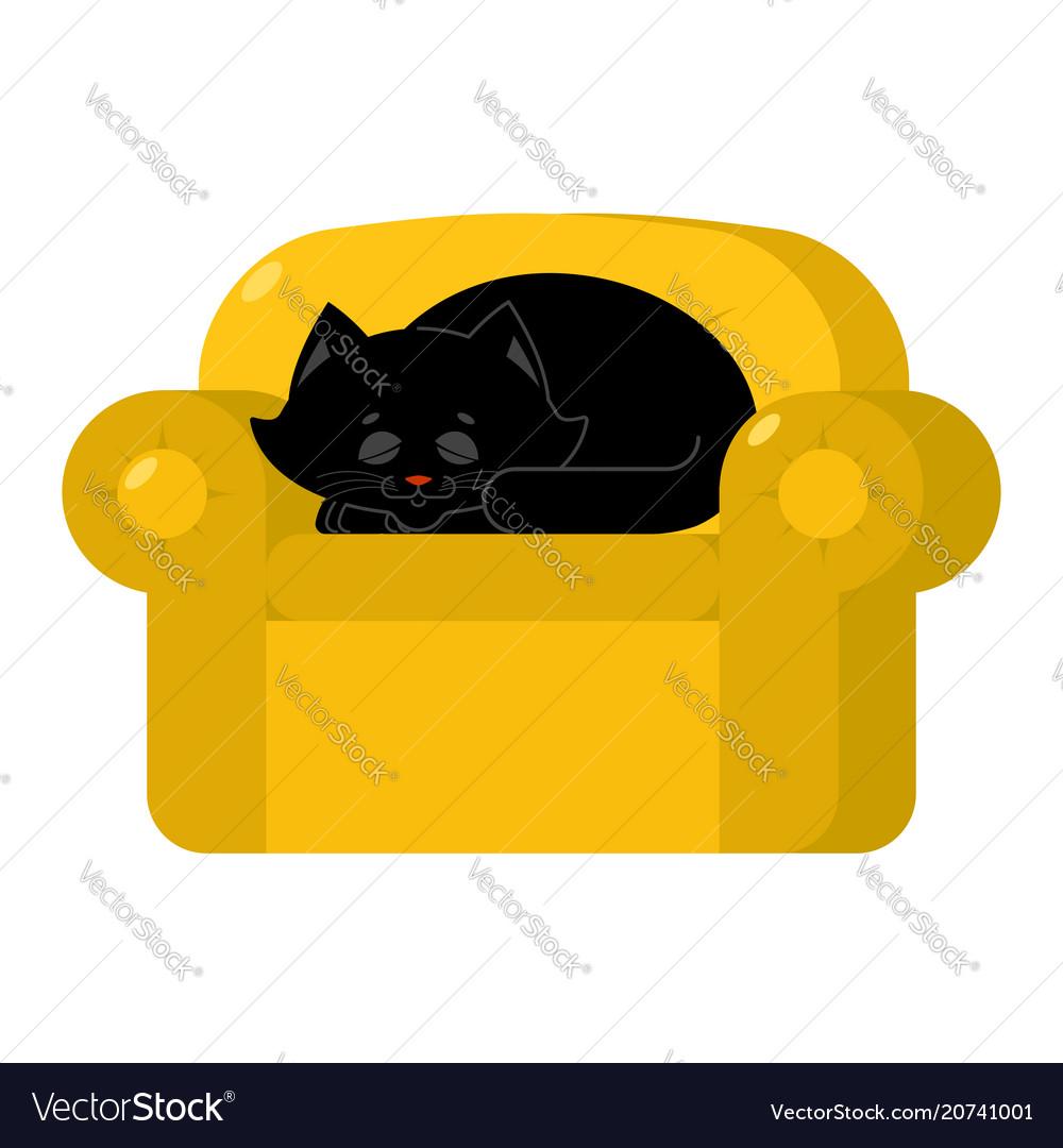 hight resolution of cat pet diagram