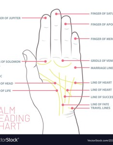 also palm reading chart palmistry map of the palms vector image rh vectorstock